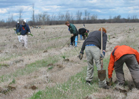 Youth group assists with planting red pines
